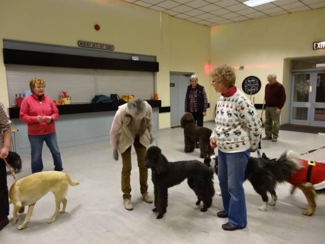 Dog Training Southport